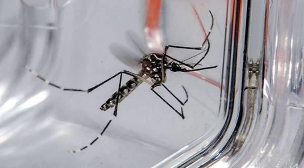 Confirmado segundo caso de dengue em Santa Rosa