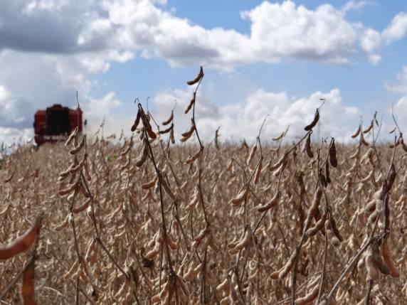 Crédito rural tem novas regras com entrada em vigor da MP do Agro