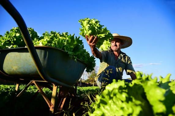 Contag quer plano safra específico para agricultura familiar