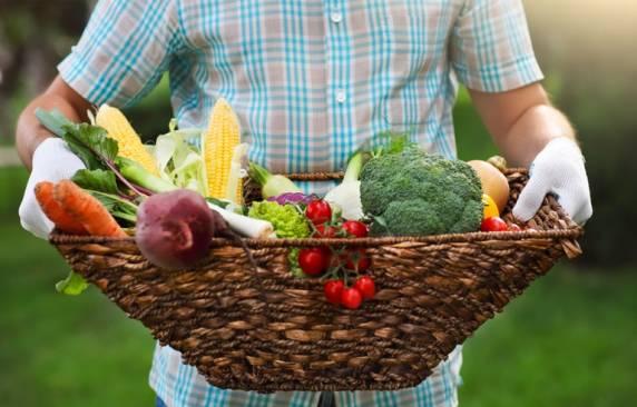Governo libera R$ 500 mi para compras da agricultura familiar