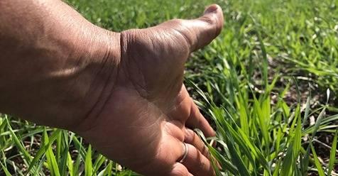 Relação preço da saca e custo de plantio de trigo é a mais favorável dos últimos 20 anos
