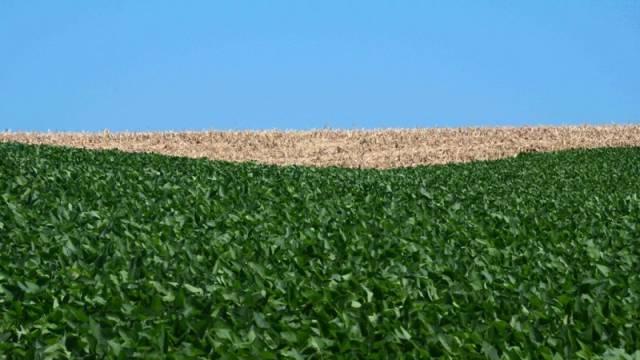 Seca provoca queda de 28,7% na safra de verão no Estado